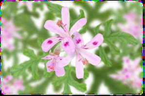 画像に alt 属性が指定されていません。ファイル名: image-19.png